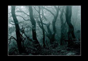 Zdjęcie przedstawiające gęsty, zamglony las liściasty